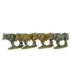 CW28a ECW Oxen and Drover